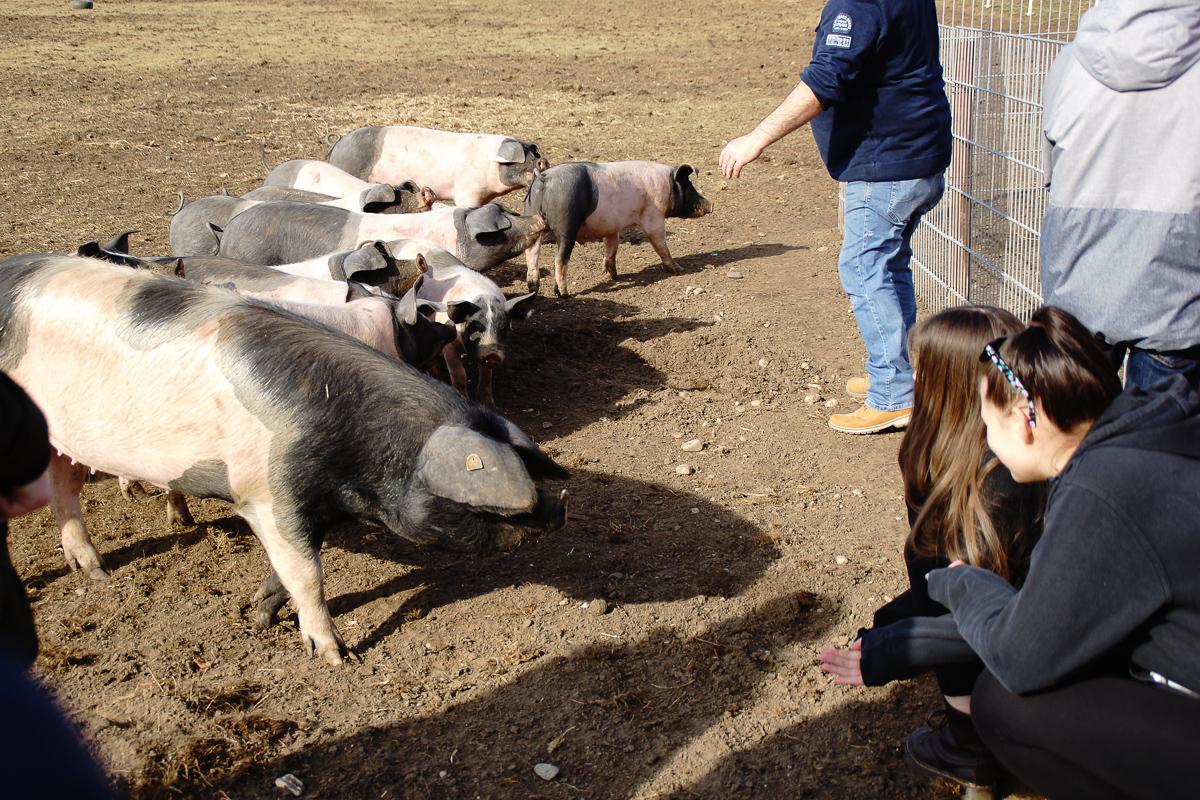 Biohof Hubicek Führung Schweine 09