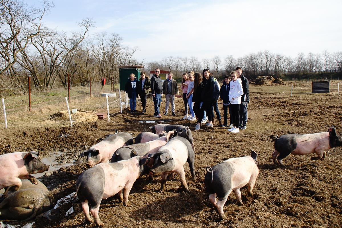 Biohof Hubicek Führung Schweine 16